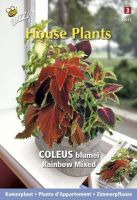 Kamerplanten Coleus Rainbow mix